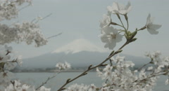Traditional Japanese sakura 4k  non color graded (4000x2160) Stock Footage