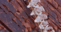 Animal Bones in a Red Rock Wilderness Landscape Extreme Close Angled Spine Stock Footage
