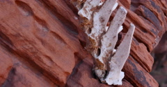 Animal Bones in a Red Rock Wilderness Spine Extreme Closeup Stock Footage