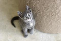 Cute Kitty Looking UP - stock photo