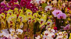 Beautiful, Potted Orchids, Swaying in a Light Breeze. Stock Footage