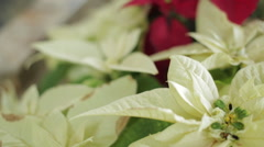 Church flowers Stock Footage