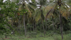 Muttom Forest India Stock Footage
