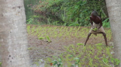 Farmer plants rice Stock Footage
