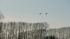Two swans swimming beautifully landing on winter lake Stock Footage