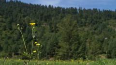 Flower in Beautiful Green Landscape Stock Footage