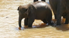 Elephant baby in the river - Sri Lanka 4k Stock Footage