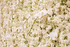 white flowers background. - stock photo