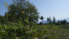 Flower and Tree  in Beautiful Landscape Stock Footage