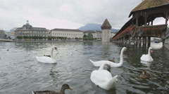 Lucerne Switzerland swans in Reuss River Stock Footage