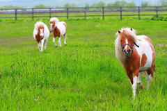 Green grass and horses - stock photo