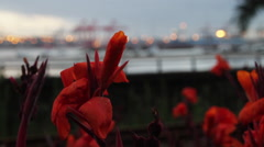 Pull focus, flowers and harbor Stock Footage