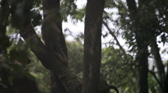 A group of baboons in a tree Stock Footage