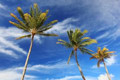 coconut trees and blue sky - stock photo