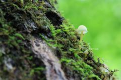 green Nature with mushrooms - stock photo
