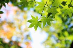 Stock Photo of leaves with natural background