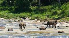 Elephants in the river - Sri Lanka 4k Stock Footage