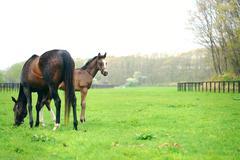 Stock Photo of horses on grassland