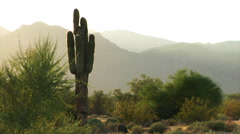Cacti slow zoom - stock footage