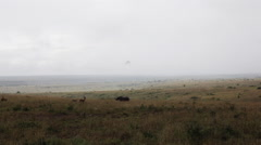 Wild rhino and gazelles in Kenya Stock Footage