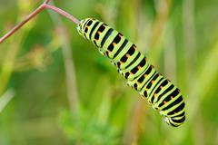 Colored caterpillar - stock photo