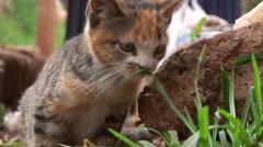 Stray kitten - stock footage