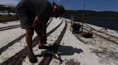 Fisherman unhooks small shark from fishing line Stock Footage