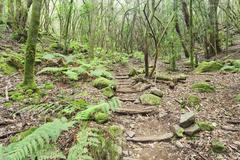 Laurel forest, laurisilva, Parque Nacional de Garajonay, La Gomera, Canary - stock photo