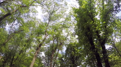 Panorama In The Forest 2 4K Stock Footage
