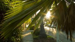 sunset in Silver Lake, Los Angeles California, palm tree, dolly - stock footage