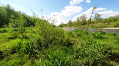 Twigs wiggle in the wind by Vistula river, Poland Stock Footage