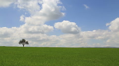 Clouds time lapse and tree in the corner Stock Footage