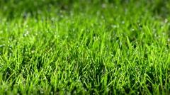 Macro detail focused pan across wet grass 4K Stock Footage