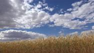 Stock Video Footage of 4K Sunlit Farm Wheat Blue Sky Clouds Field Scenic