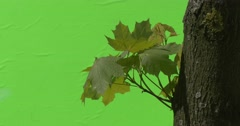 Green plants bushes grass leaves flowers branches of trees on chromakey green Stock Footage