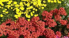 Stock Video Footage of Shot of variety of flowers in plant nursery, Agra, Uttar Pradesh, India