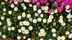 Stock Video Footage of Pan shot of variety of flowers in plant nursery, Agra, Uttar Pradesh, India