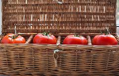 Four tomatoes with dew lying in wicker box - stock photo