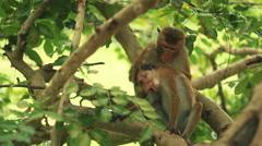 working life of monkeys - stock footage