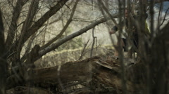 slow motion of man trail running jumps over log - stock footage