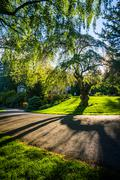 Tree and a walkway at Pittock Acres Park, in Portland, Oregon. - stock photo