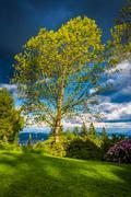 Tree at Pittock Acres Park, in Portland, Oregon. - stock photo