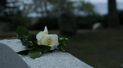 Stock Video Footage of slow motion panning shot of rose on grave stone in cemetary