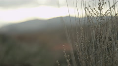 Slow motion rack of desert landscape Stock Footage