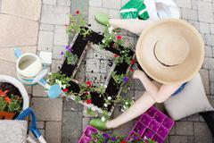 Lady gardener transplanting petunias - stock photo