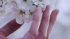 Slow motion close up or woman's hand touching  flower blossoms Stock Footage