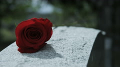 Close up rose on grave stone in cemetery Stock Footage