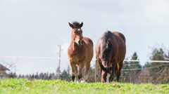 Young horse with mother on pasture 4K Stock Footage