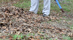 Person Raking Leaves Stock Footage