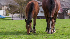 Little family of two horses eating grass on pasture 4K Stock Footage